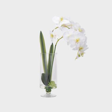 相望-玻璃花器白色蝴蝶兰水花