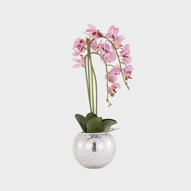 垂眸-玻璃外鍍銀蝴蝶蘭