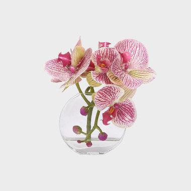 垂眸-玻璃花器紫色斑点蝴蝶兰