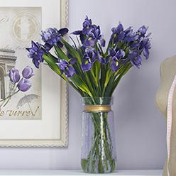 紫色鸢尾水花